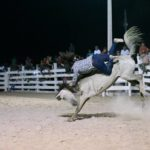 The Rupununi Rodeo: Photos 141-150