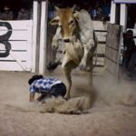 The Rupununi Rodeo: Photos 171-180